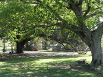 The Centennial Lawn